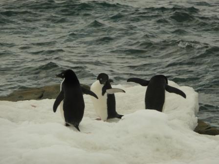 I veri abitanti dell'Antartide