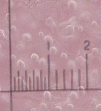 Una foto ravvicinata di una carota di ghiaccio: vi sono intrappolate le bolle d'aria del passato, un vero e proprio tesoro per studiare come sono cambiati l'atmosfera ed il clima nel tempo.